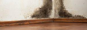 Mould & Asbestos Damage